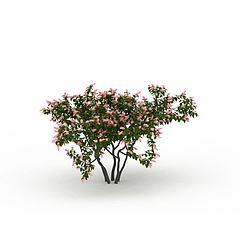 园林装饰树模型3d模型