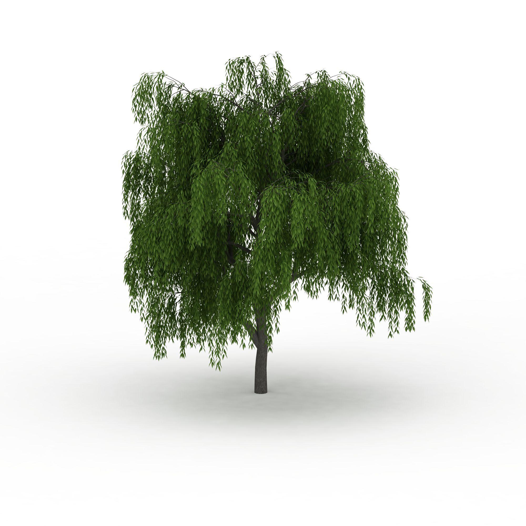 户外建筑 园林景观小品 公园柳树3d模型 公园柳树png高清图  公园柳树