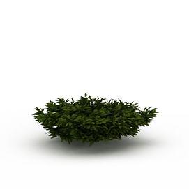 园林景观<font class='myIsRed'>树</font>3d模型