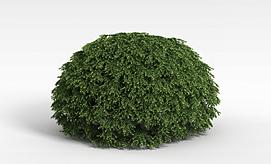 球形灌木模型