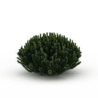 常青植被3d模型