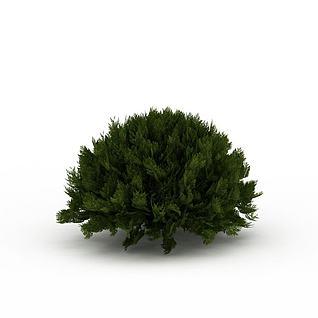 圆形常青灌木3d模型