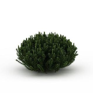圆形针叶植被3d模型