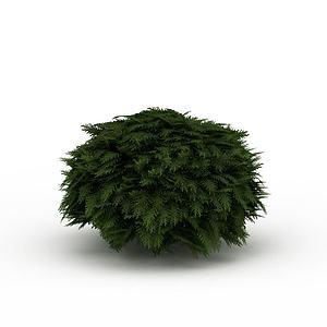 常青灌木模型
