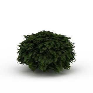 常青灌木3d模型