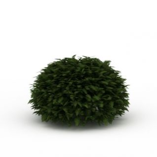球形灌木3d模型