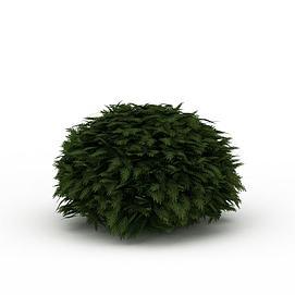 球形灌木景观模型