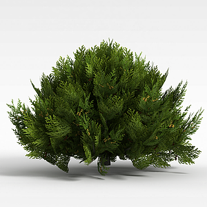 3d柏树模型