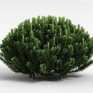 常青植被模型