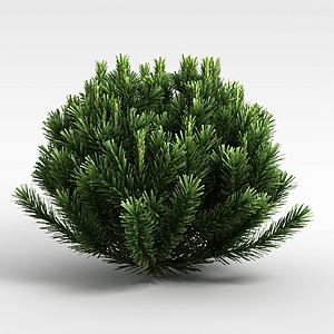 针叶植被模型