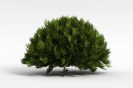 圆形常青灌木模型