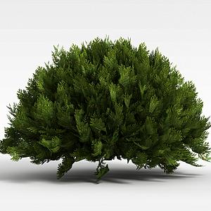 圓形常青灌木模型
