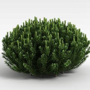 3d圆形针叶植被模型