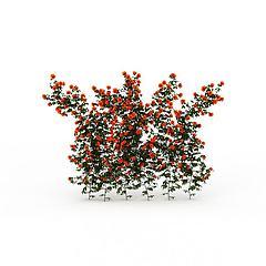 红花藤蔓模型3d模型