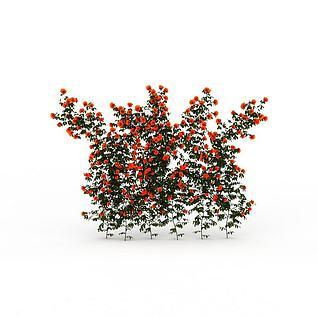 红花藤蔓3d模型