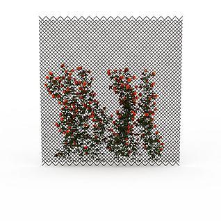 开花藤蔓3d模型