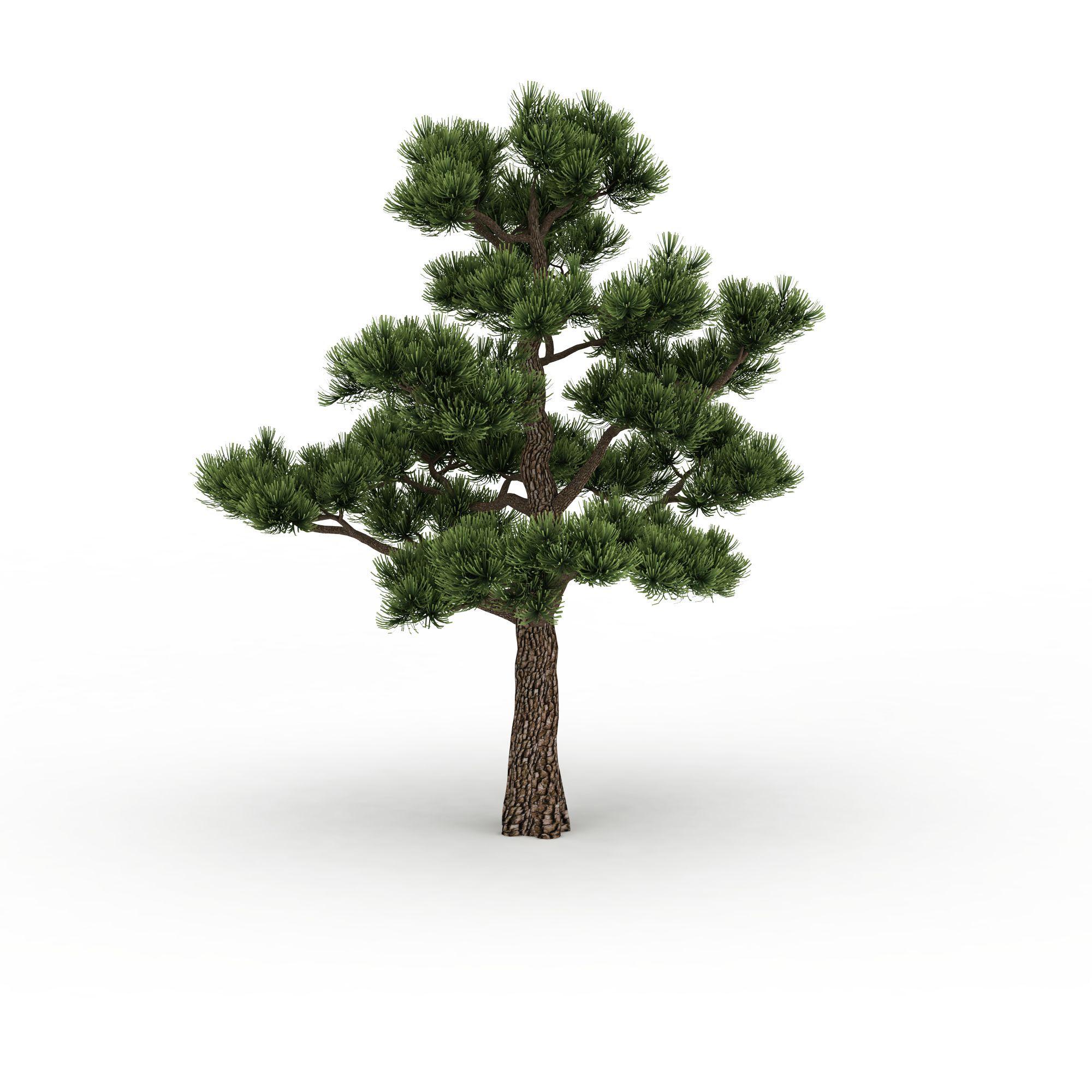 松树图片_松树png图片素材_松树png高清图下载