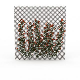 橘色观赏植被3d模型