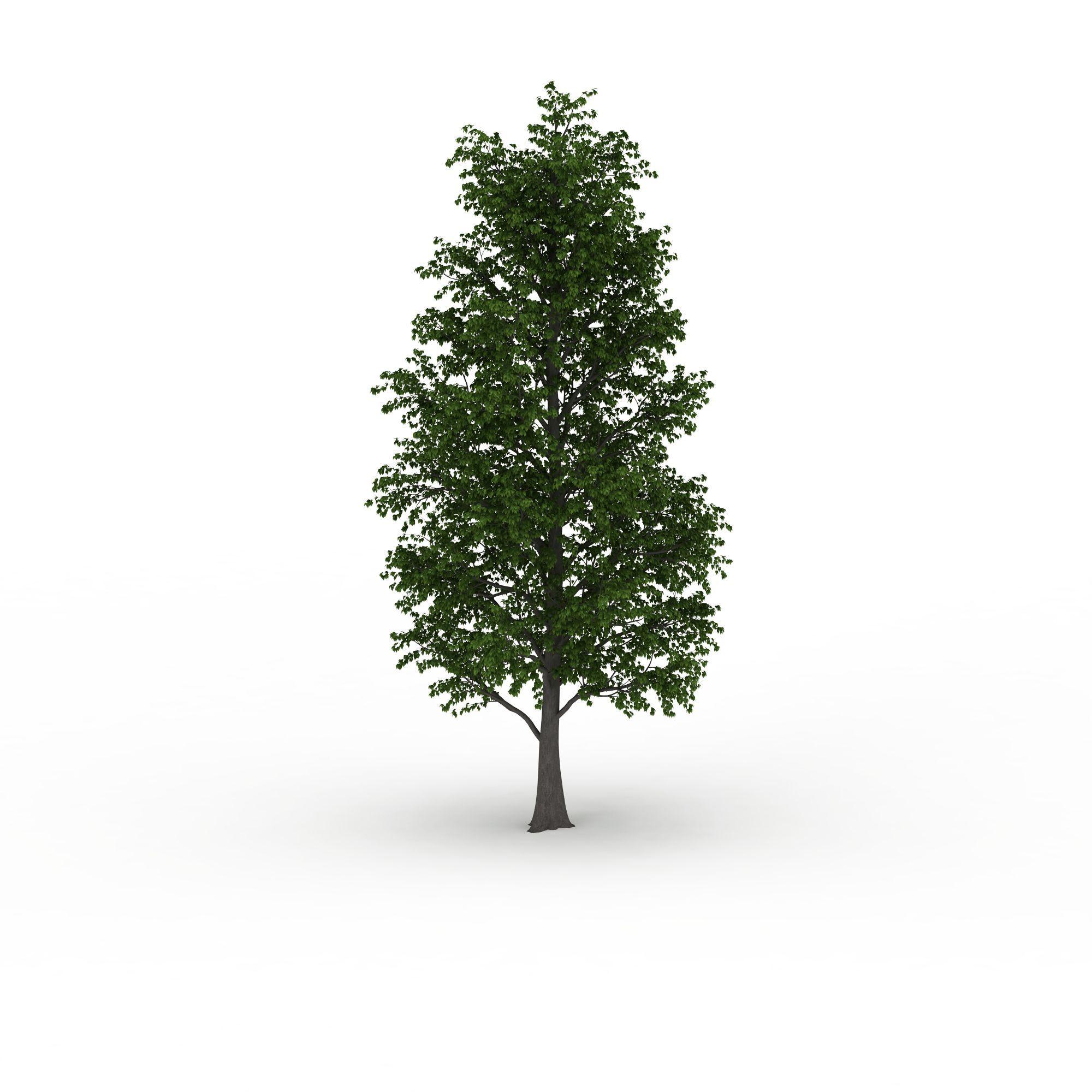 室外装饰树图片_室外装饰树png图片素材_室外装饰树图