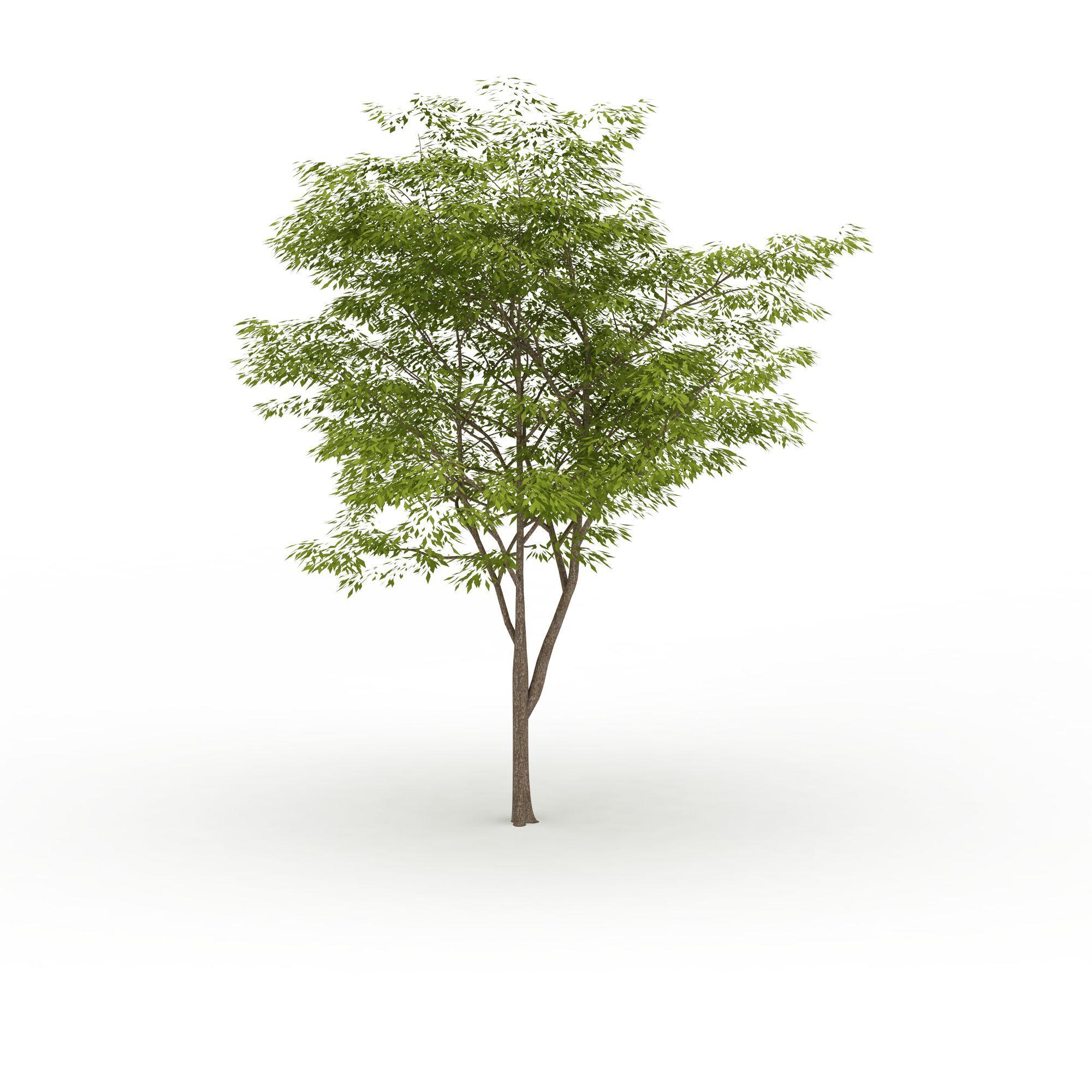 行道树高清图下载