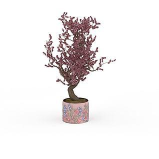 盆景树3d模型