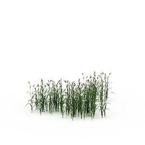 绿色狗尾草模型