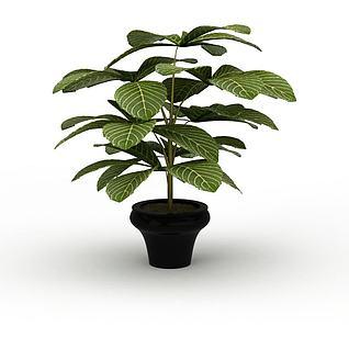 绿叶盆景3d模型