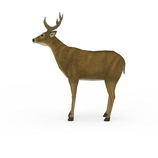 草原鹿3d模型