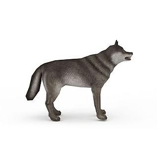 三维模型狼3d模型