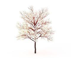 樱花树模型3d模型