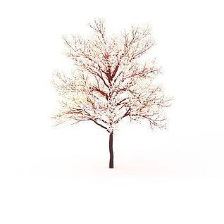 樱花树3d模型