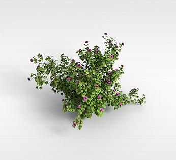 绿色小植物
