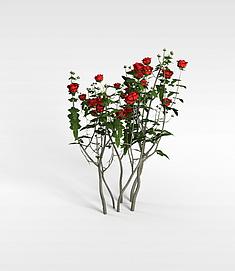 3d玫瑰花株模型