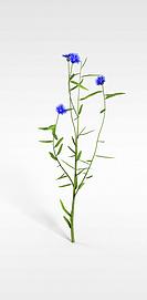 3d花枝模型