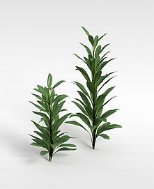 3d绿植模型