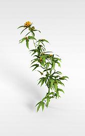 3d花草模型