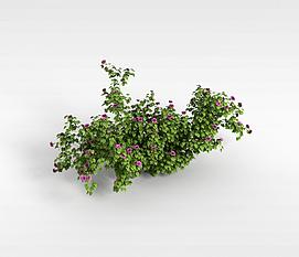3d野花模型
