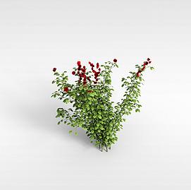 3d植株模型