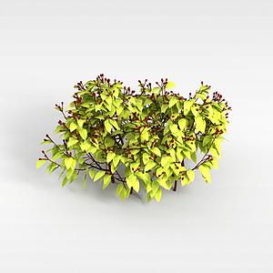 灌木丛模型