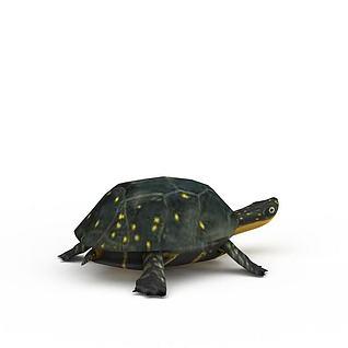 乌龟3d模型