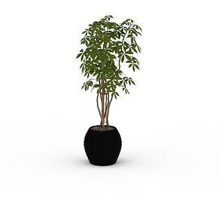 树苗盆栽3d模型