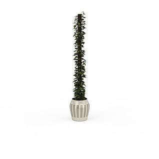 爬藤盆栽3d模型