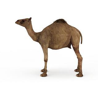 骆驼3d模型