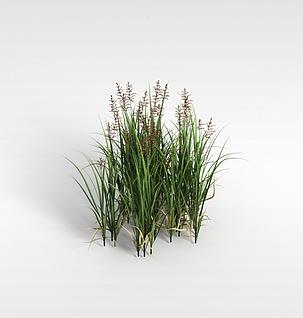 3d野草模型