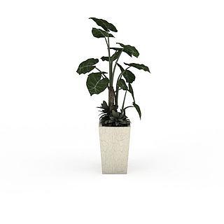 室内大型盆栽绿植3d模型