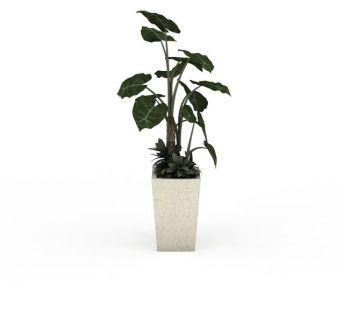 室内大型盆栽绿植
