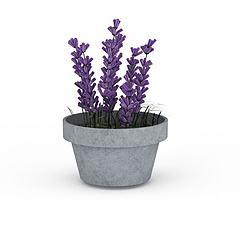 薰衣草盆栽模型3d模型