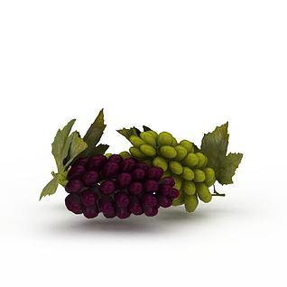 提子葡萄3d模型