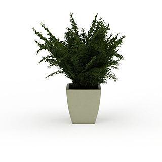 盆栽花草绿植3d模型