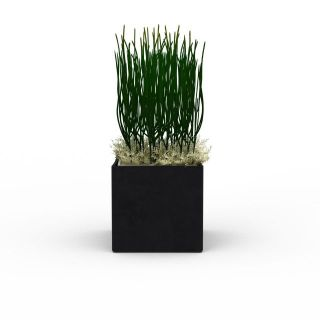花草绿植盆栽3d模型